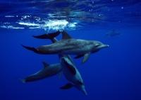 dolphin_808_004:2.jpg